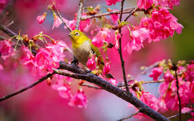 lovely spring bird photography wallpaper 3 animal wallpapers