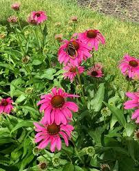 butterfly garden picture of reiman gardens ames tripadvisor