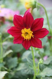 free flowers flower free flowers photos free flowers stock photos free