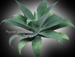 Tropical House Plant Identifier - tropicopia online house plant picture of cactus u0026 succulent