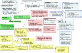 endocrine system concept map endocrine system i cmap rid 1196496959516 697487269 24770 partname htmljpeg