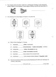 stages of mitosis worksheet answers free worksheets library