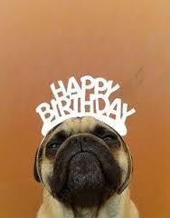 Happy Birthday Meme Dog - happy birthday animal meme 23 jpg 188纓240 pugterest