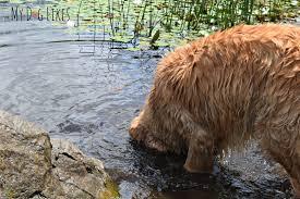 The Devils Bathtub Dog Friendly Parks Mendon Ponds Park