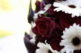 Burgundy Roses Roses Bouquet Burgundy Flower Close Up White Gerbera Hd Wallpaper