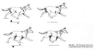 Dog Anatomy Front Leg 91f5 Jpg