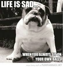 Depressed Pug Meme - 31 most funny sad pictures and photos