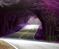 world most beautiful tree tunnels