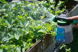 how to fertilize your garden mid season u2014 seedsheet