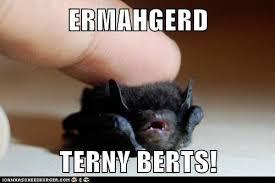 Ermahgerd Animal Memes - ermahgerd terny berts animal capshunz funny animals animal