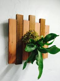 Fern Decor by Staghorn Fern Mounted In Custom Reclaimed Douglas Fir Wood Last