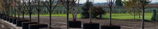 dsc 0749 premier trees