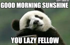 Cute Good Morning Meme - good morning sunshine meme happy wishes