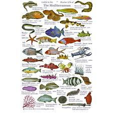 types of mediterranean sea fish pictures to pin on pinterest