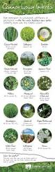 programs natural resources weeds and common lawn weeds visual ly hierbas m pinterest common