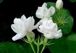 ideas to grow fragrant garden flowers kerala latest news