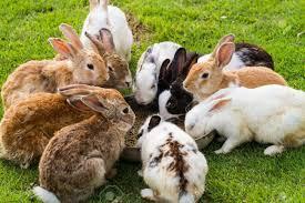 rabbit garden of rabbits food in the garden stock photo picture