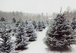 Christmas Tree Farm Va - christmas christmas tree lots near me greensboro mechanicsville