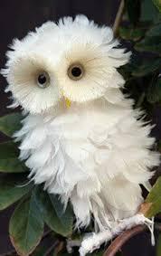 white owl 2 wallpapers newborn snowy owl snowy owl baby snowy white baby owl animal