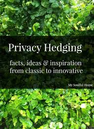 Flowering Privacy Shrubs - creeping fig vine text 1 jpg