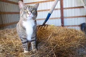 Barn Cat Names Cat Beat A Cat Named Frank U2013 Pet Radio Magazine