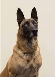 belgian sheepdog michigan kansas police k9 fatally shot law officer