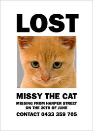 Missing Cat Meme - yeah thats not what i was looking for at all