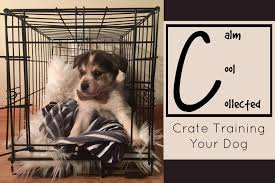 calm cool collected calm cool and collected crate training your dog fetch wisconsin