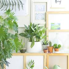 houseplant of the month october aglaonema