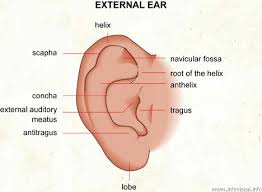 Ear Anatomy Pictures Anatomy Of An Ear Defeat Diabetes Foundation