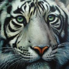 white tiger wallpapers find best latest white tiger wallpapers in