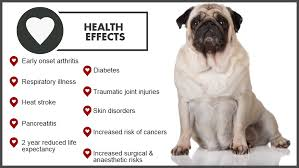 loss of dog dog weight loss dog weight loss diet plan overweight dog food