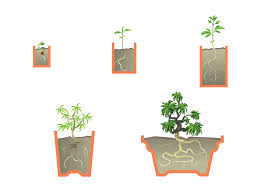 how to start a bonsai tree with pictures wikihow