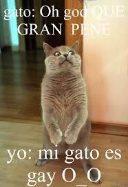 Gato Meme - gato oh god que cat meme cat planet cat planet