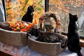 cat decoration cats thanksgiving window animals pictures