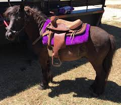 Used Horse Trailers For Sale In San Antonio Texas Horses Needing Homes In Texas Home Facebook
