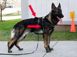 Comfort Flex Dog Harness Flyball Harness Secure Training Theories Methods U0026 Tools