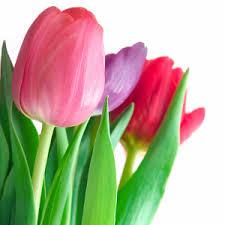 Bulk Flowers Online Wholesale Flowers Online Bulk Flowers Online 48longstems