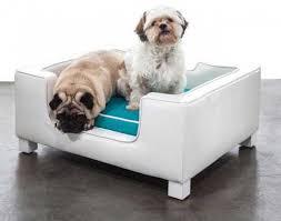 divanetti per gatti arredamento per cani e gatti fotogallery donnaclick