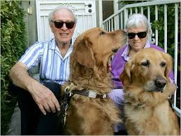 Dogs Helping Blind People 82 Best Helper Dogs Images On Pinterest Service Dogs Therapy