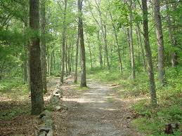 Massachusetts forest images Freetown ma walk in the woods freetown forest photo picture jpg