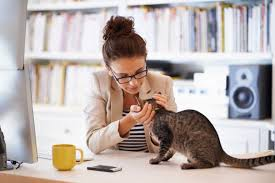 cat behavior 17 things your cat wants to tell you reader u0027s