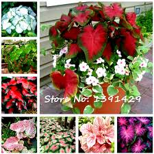 lovers flower garden promotion shop for promotional lovers flower