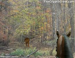 Bigfoot Sightings Map Horse Riders Encounter Bigfoot The Crypto Crew