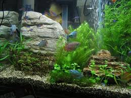 Aquascape Nj 100 Aquascaping Rocks Aqua Scape A Guide To Aquascaping The