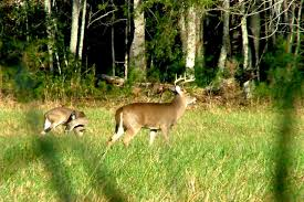 Tennessee wildlife tours images Biologists recommend additional deer bear hunts in tennessee jpg