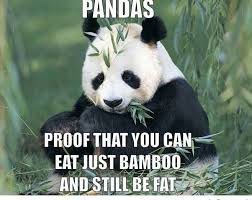 friday funny have you tried the panda diet