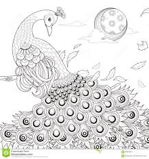 graceful peacock coloring page stock vector image 58878910