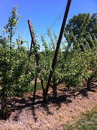 apple trellis jim u0027s supply company inc
