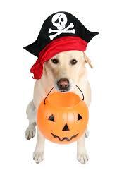 diy pet halloween costumes the u0027how to u0027 dog blog